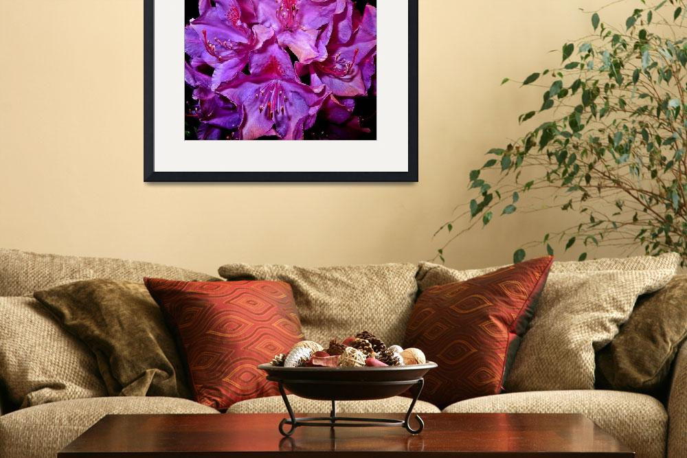 """Purple Rhododendron&quot  (2008) by bavosiphotoart"