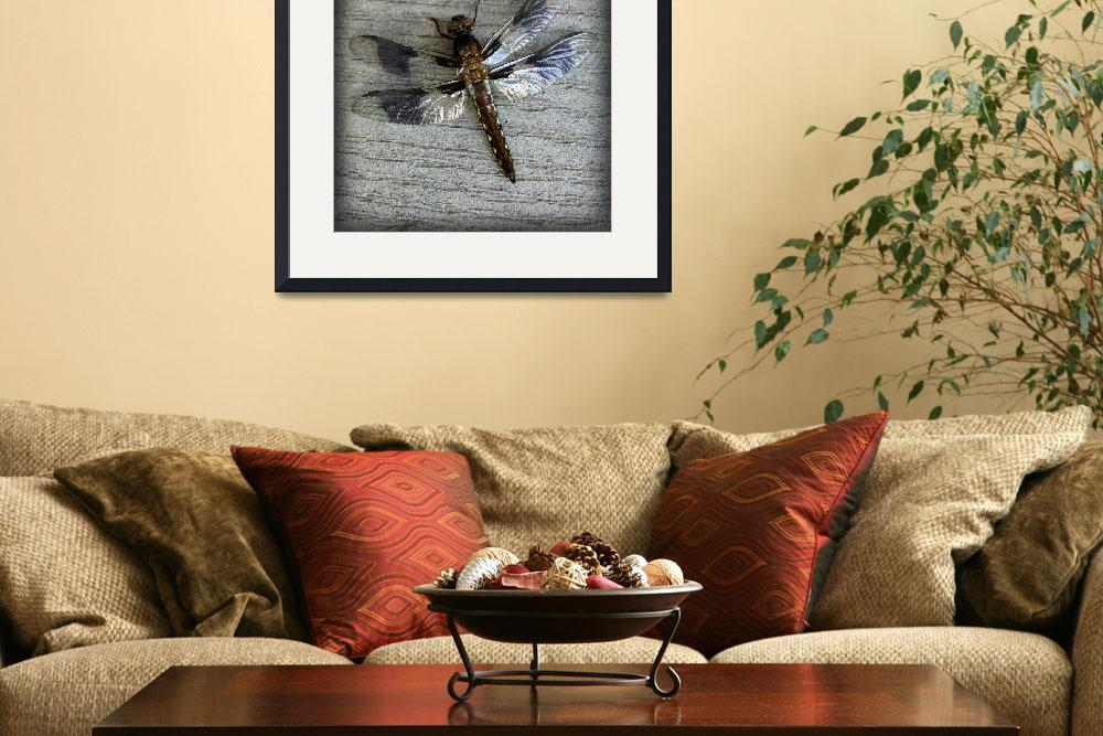 """Female Whitetailed Skimmer Dragonfly Square""  (2015) by KsWorldArt"