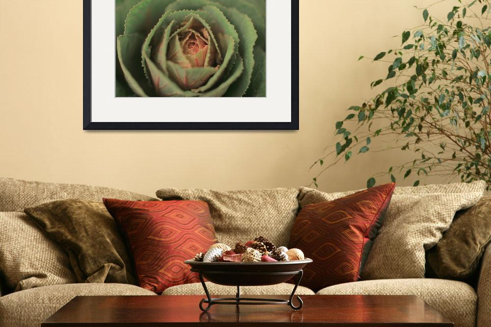 """""""Pale Ornamental Cabbage&quot  (2013) by newimage"""
