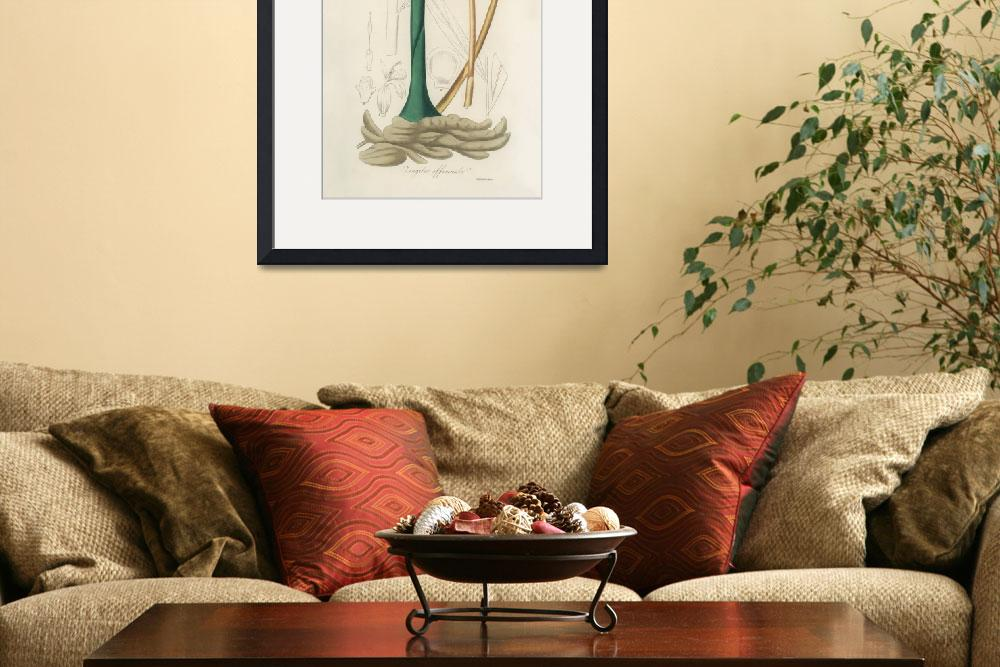 """""""Vintage Botanical Ginger&quot  by FineArtClassics"""