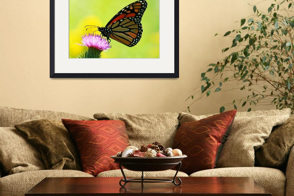 """""""Monarch on Thistle&quot  (2008) by nature55"""