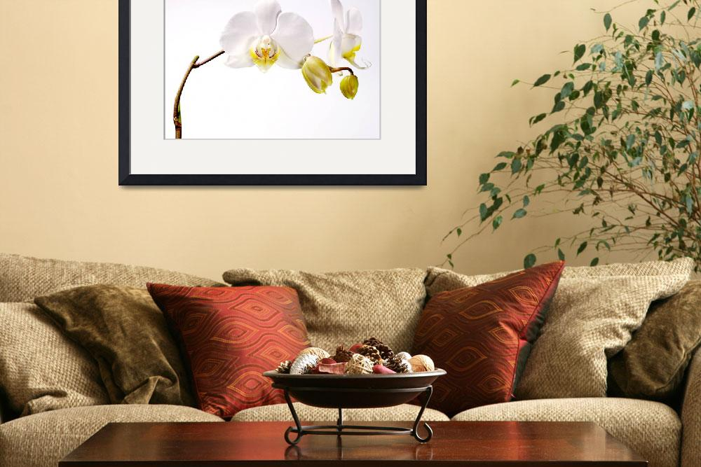 """""""Orchid&quot  (2009) by nailiaschwarz"""