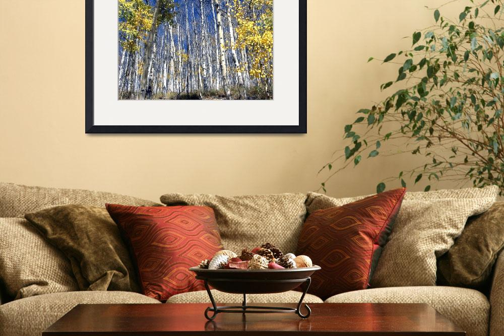 """""""Aspens #1&quot  by Callahan_Galleries"""