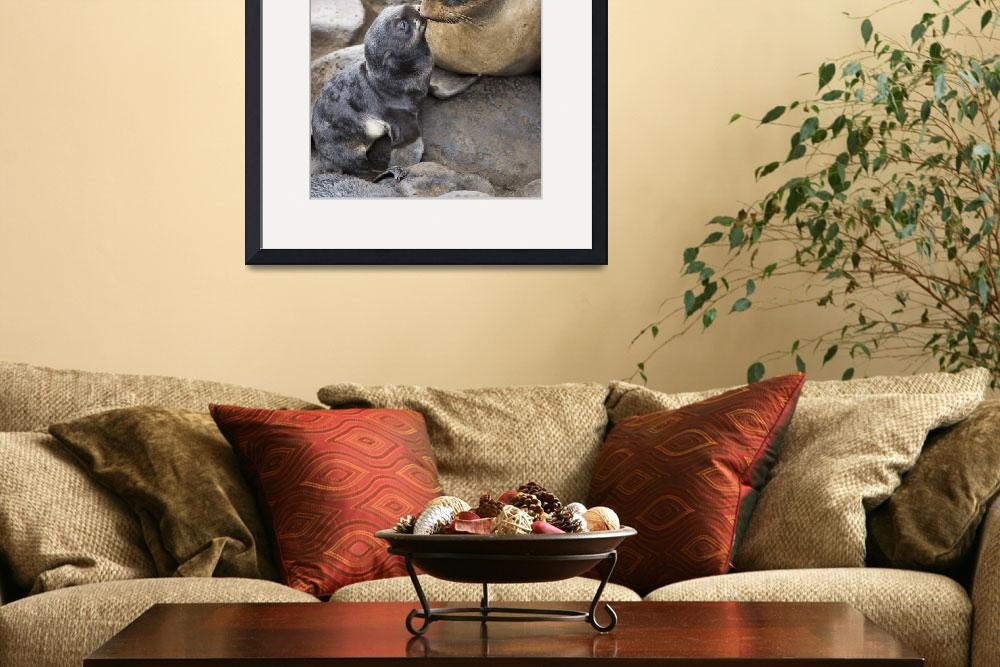 """""""Portrait of a Northern Fur Seal mother and newborn&quot  by DesignPics"""
