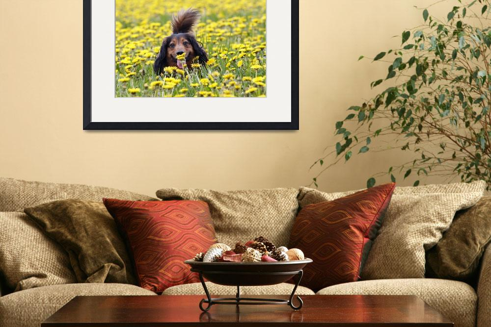 """""""Dachshund on a meadow in bloom&quot  (2009) by lamich"""