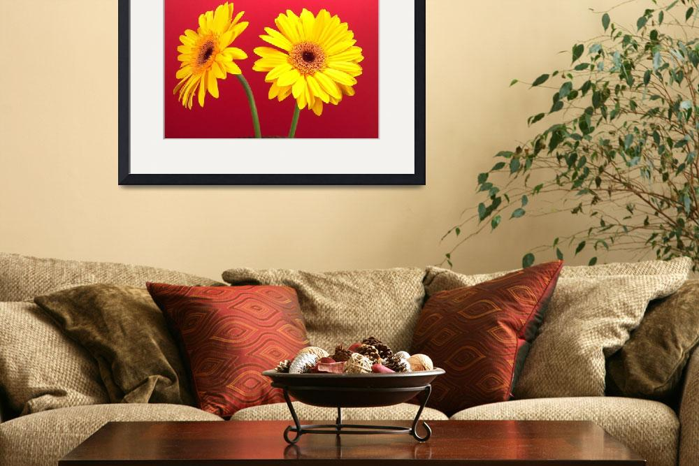 """""""Yellow Gerbera Daisies Delight On Red&quot  (2006) by Infomages"""