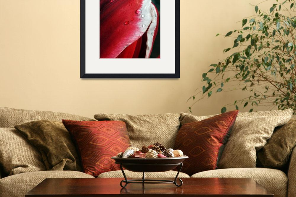 """""""Dewy Tulip&quot  (2011) by rpruettphotography"""