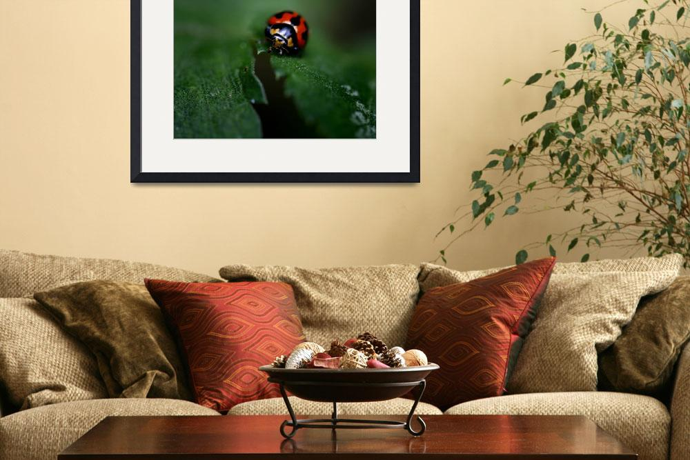 """""""Lady Bug&quot  by KellyBrown"""