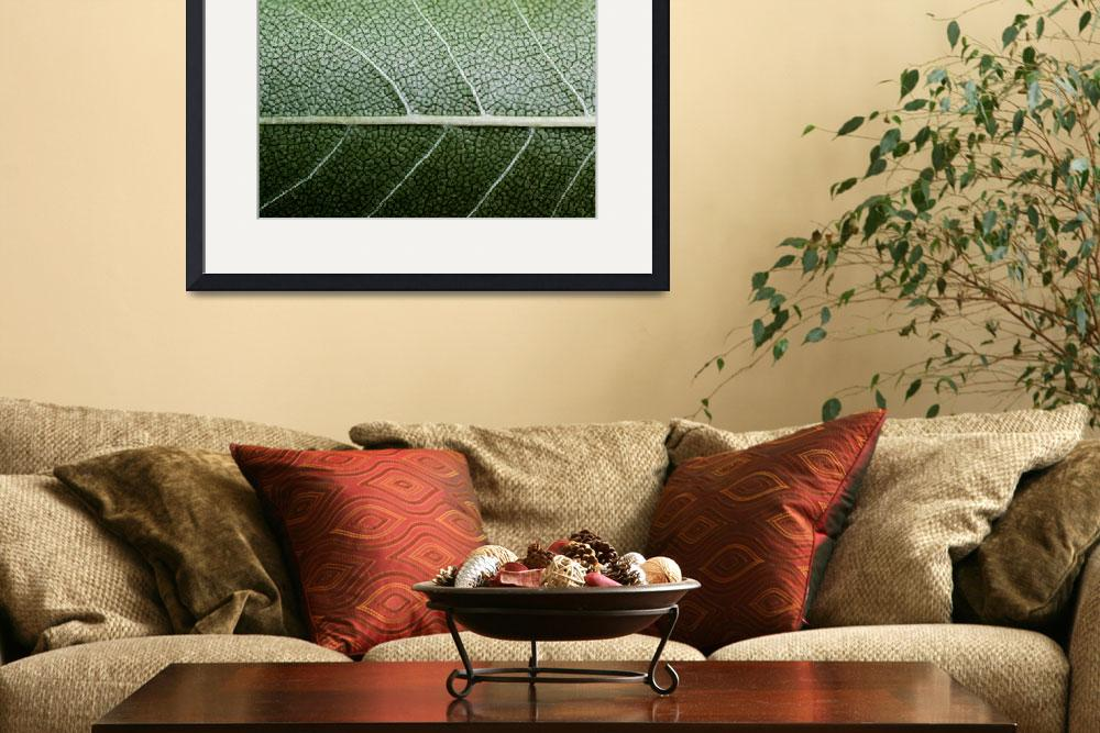 """""""GREEN LEAF&quot  (2010) by photographybyryankelly"""