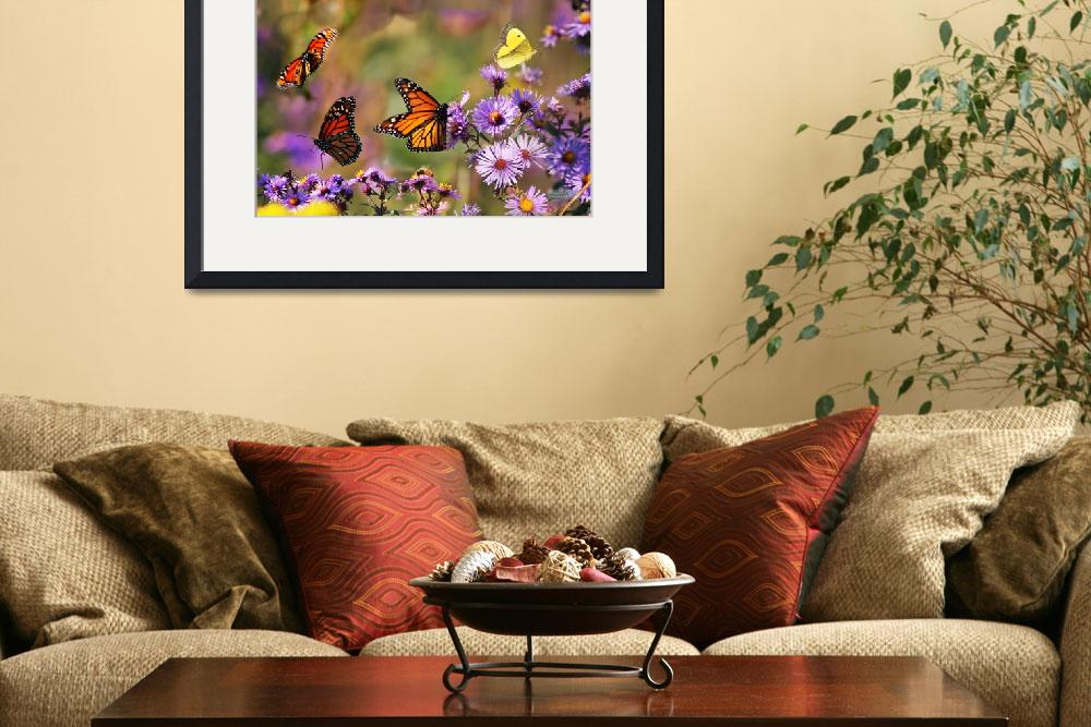 """""""Monarch Butterfly Montage&quot  (2008) by Dreambarks"""