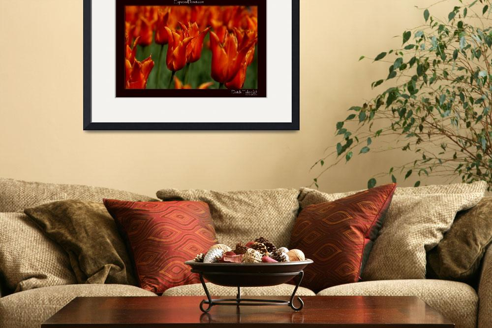 """""""Orange Tulips in the Netherlandsclose&quot  by ExposedPlanet"""