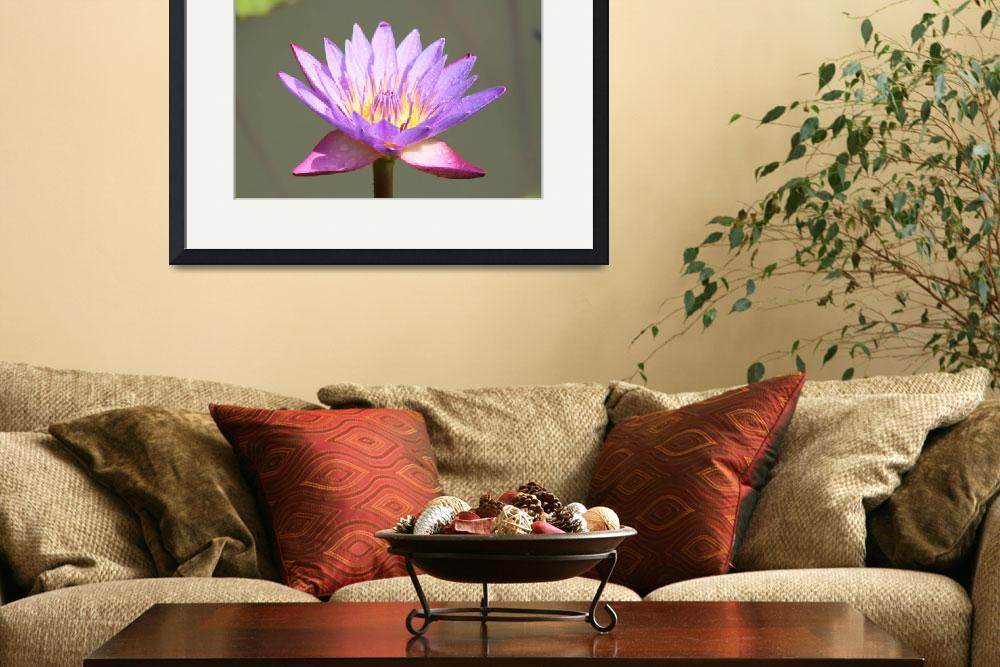 """Lotus Flower""  (2008) by AmitKapadia"
