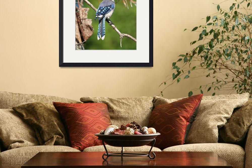 """""""Blue Jay Mosaic Tail Feathers""""  (2011) by DelightfulTrifles"""