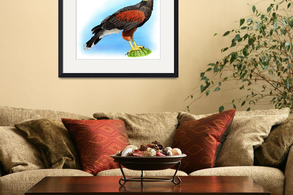 """Harris Hawk&quot  (2009) by inkart"