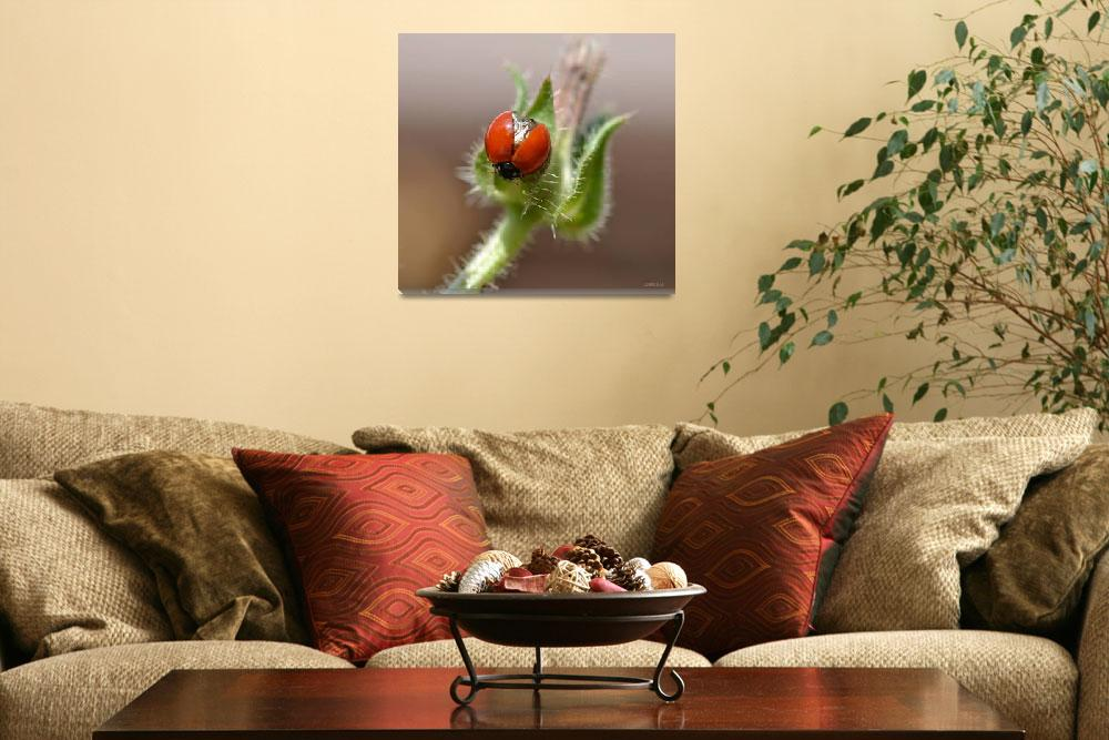 """""""Ladybug Wings Reflections&quot  (2012) by theblueplanet"""