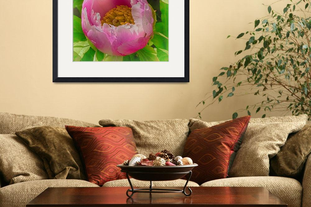 """Enchanted Peony&quot  (2015) by SoulfulPhotos"