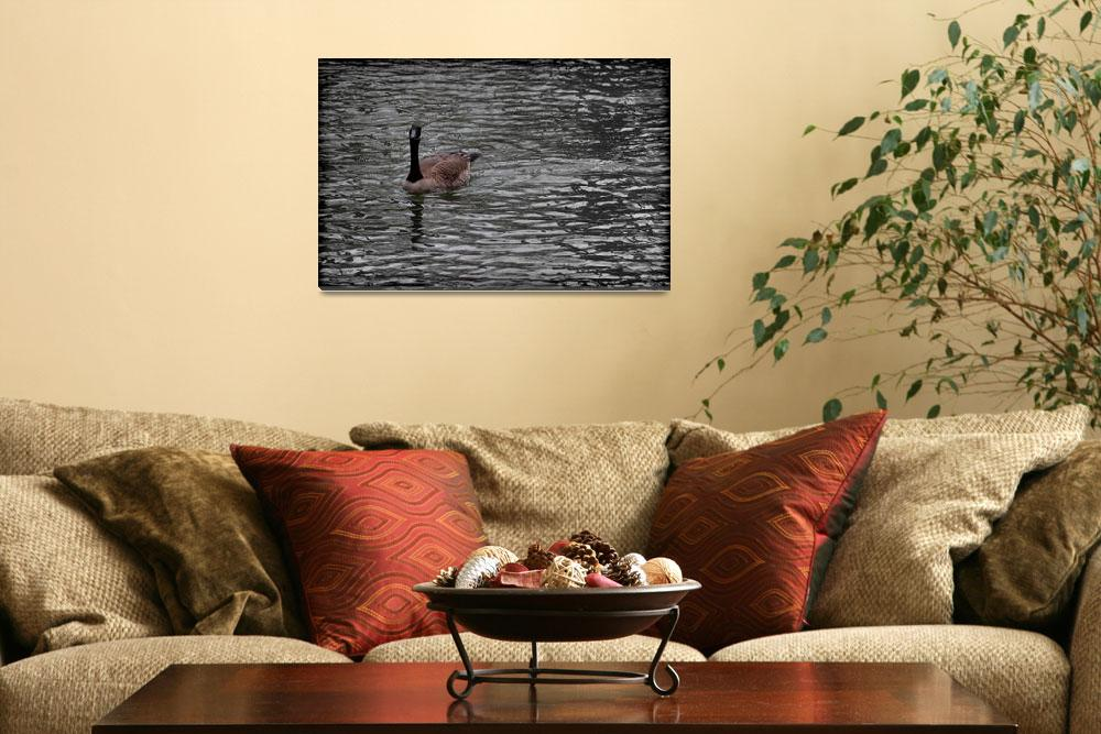 """""""Canada Goose Wondering About You Vignette""""  (2016) by KsWorldArt"""