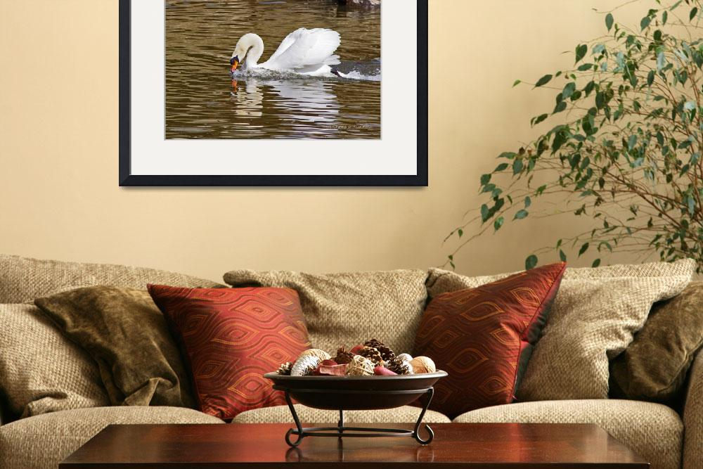 """""""Swan Swim&quot  (2014) by ChristopherSWelch"""