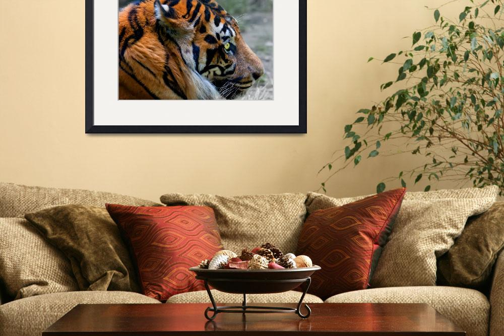 """""""Portrait of Tiger with intense Eye""""  by vphowe"""