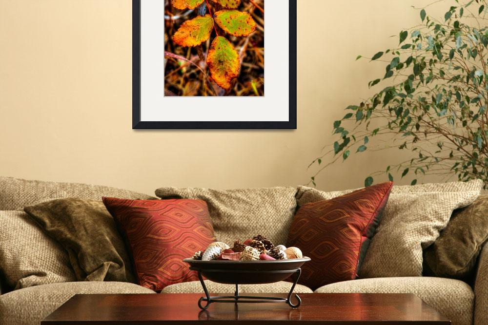 """""""Fall Leaf&quot  by Mottull"""