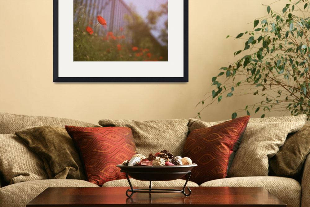 """""""Poppies growing up fence in hot summer faded vinta&quot  (2007) by edwardolive"""