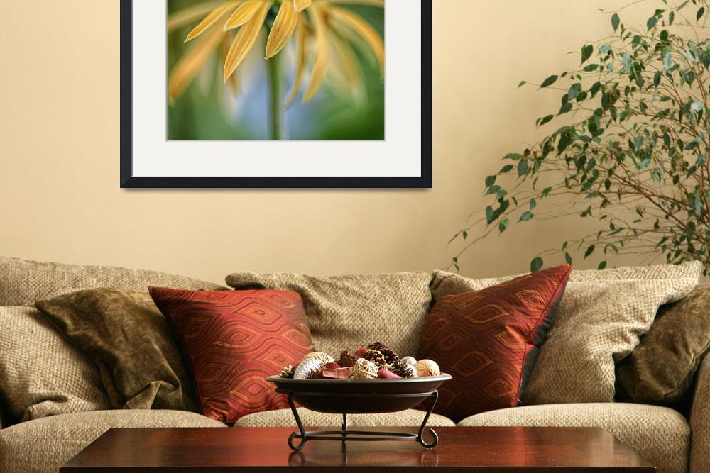 """""""Echinacea-Harvest-Moon-0708-35-Bsc""""  by CoraNiele"""