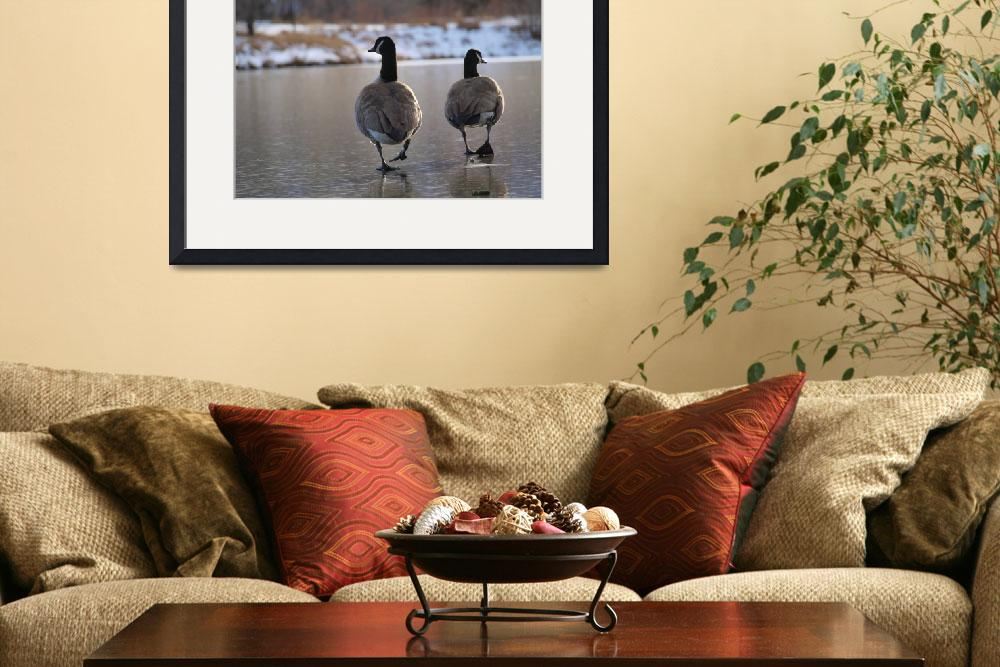 """Two Geese Walking on Frozen Pond""  (2008) by BrianInColorado"