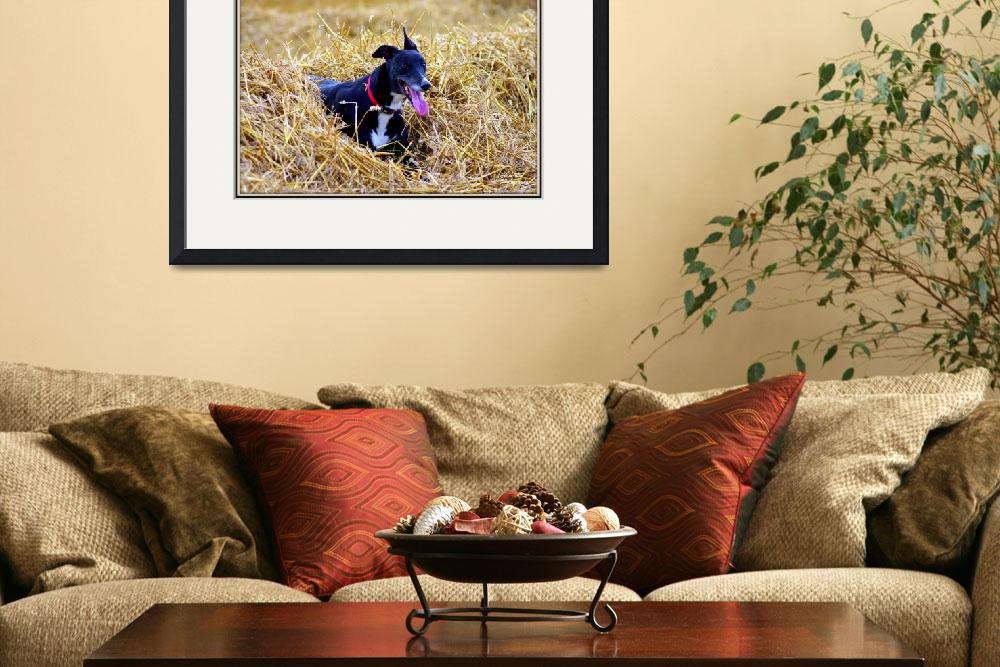 """""""Bella, Harvest Greyhound&quot  by chris-roe"""