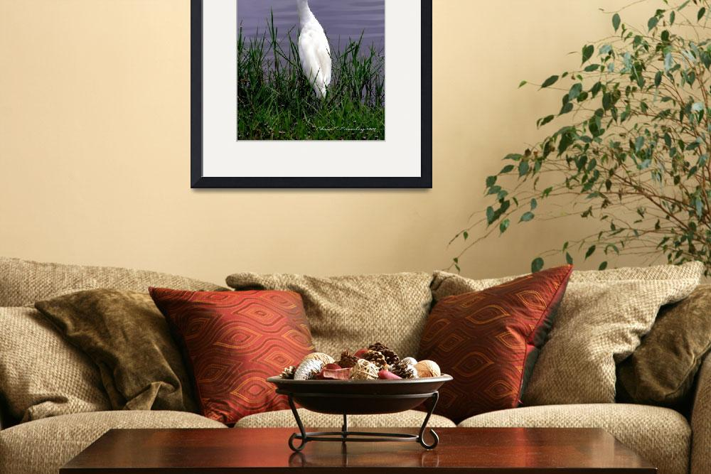 """""""Egret At Reed Canal Park""""  (2009) by ChrisCrowley"""