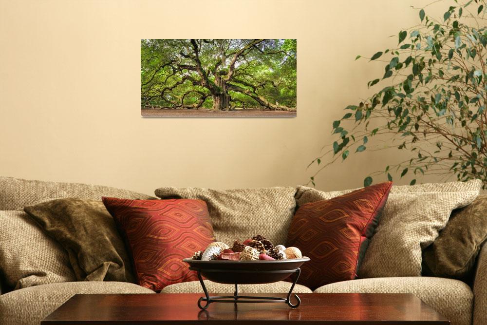 """Angel Oak Tree Charleston SC ""Omnipotent""&quot  (2011) by DustinKRyan"