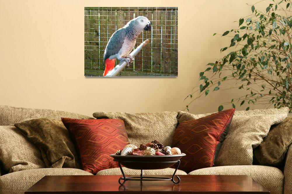 """Grey Parrot Thinking""  (2009) by weberquinn3025"
