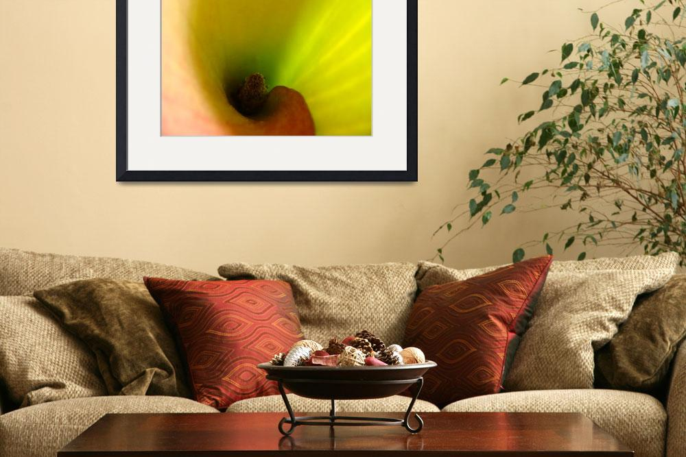 """""""Lily Spiral""""  (2008) by emmacasson"""