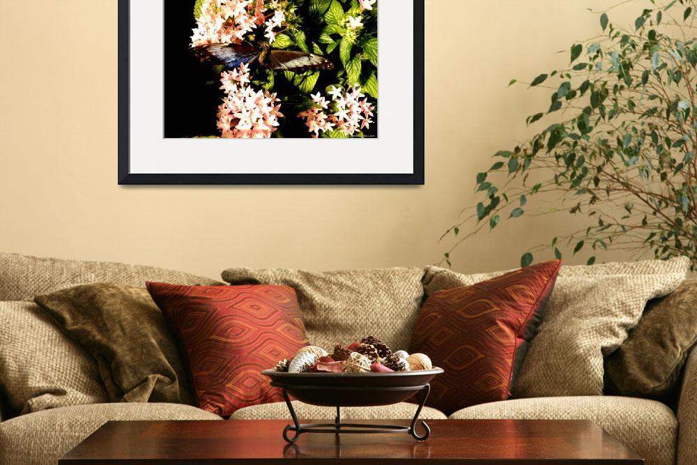 """""""Butterfly Still Life&quot  (2010) by Kimmary"""