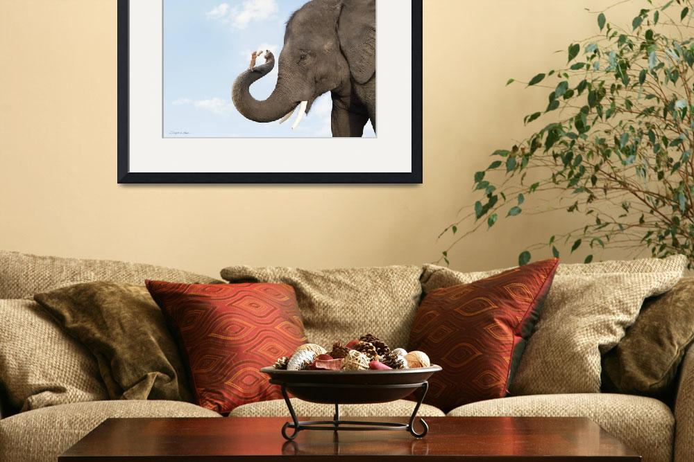 """""""Cute photo of elephant and mouse friends sharing a&quot  (2009) by StephanieDRoeser"""