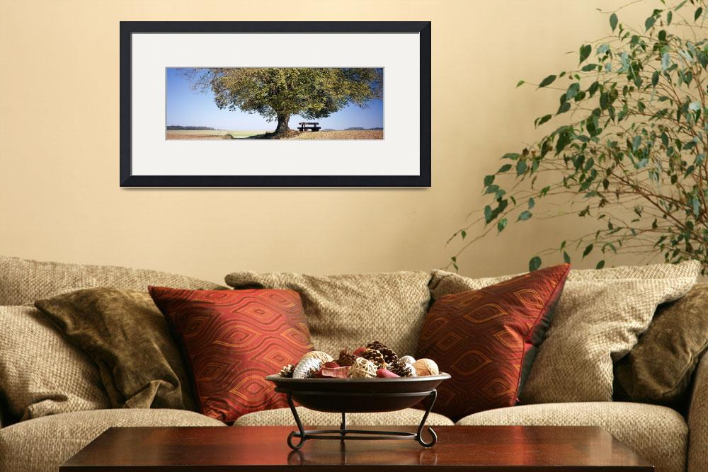 """""""Empty bench under a tree""""  by Panoramic_Images"""