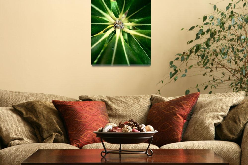 """Green Star""  by TomQ"