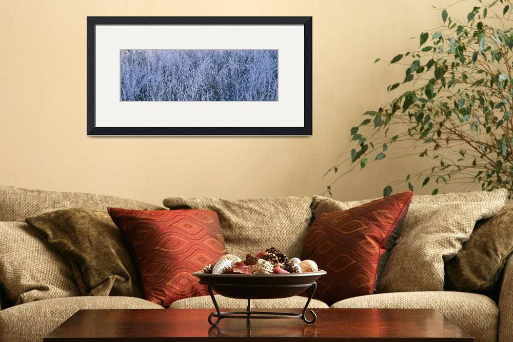 """""""Frost on grass in a field&quot  by Panoramic_Images"""