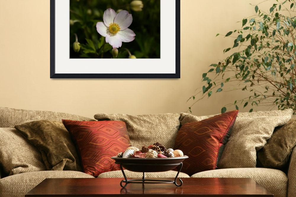 """""""Anemone virginiana&quot  (2010) by mellting"""