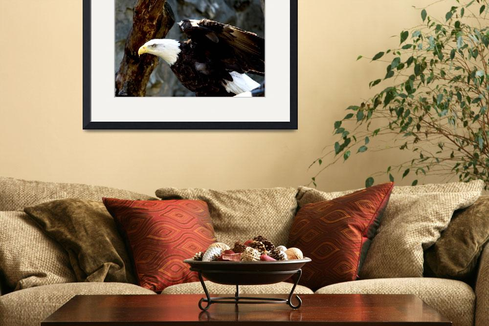 """""""Bald Eagle Pose&quot  (2009) by buffaloworks"""