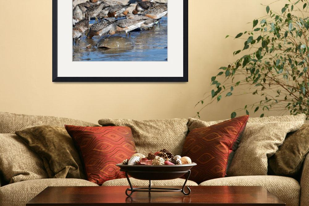 """""""Red Knots and Horseshoe Crab in Water""""  (2010) by kimkat"""
