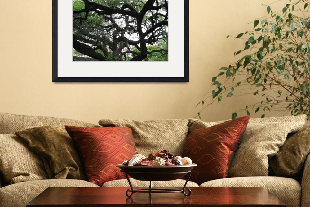 """live oak tree""  by 2findpeace"