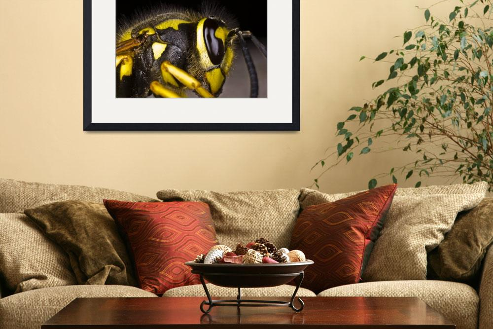"""""""Common wasp close-up&quot  (2009) by kingafoto"""