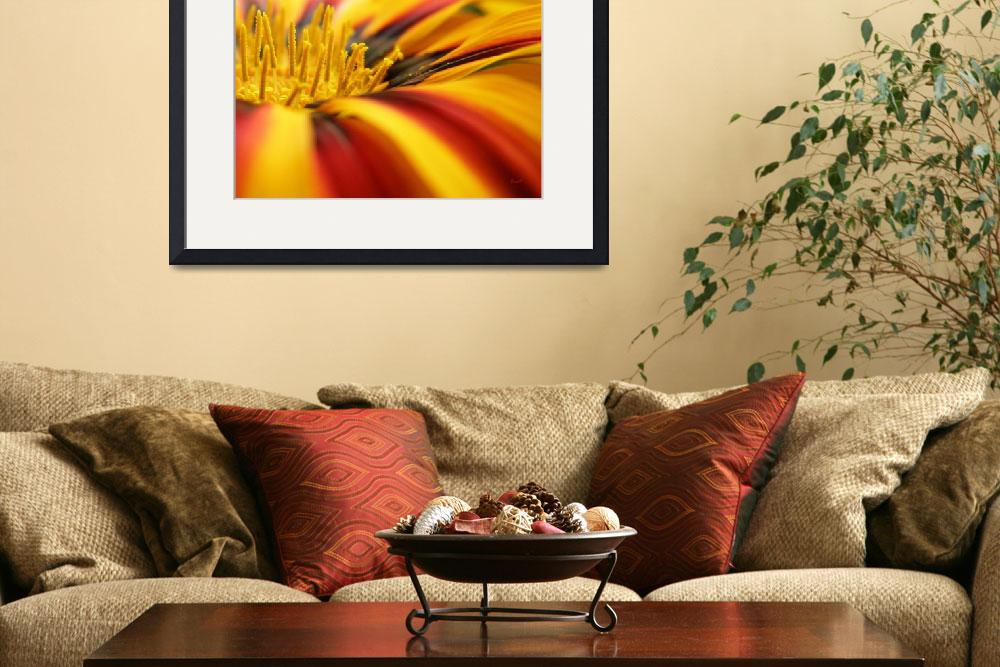 """""""Gazania - On the Bloom&quot  (2009) by Kucci"""