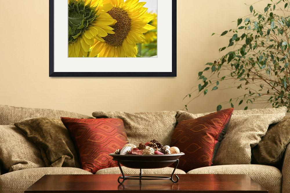 """""""Sunny Time""""  (2009) by deerphotos"""