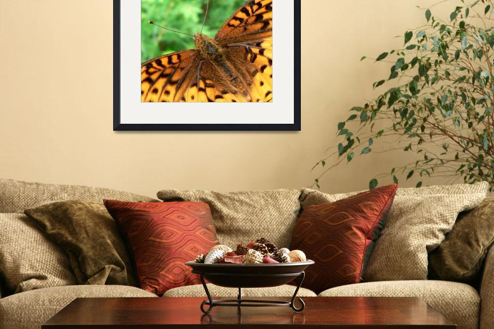 """""""Orange and Black Flutterby&quot  (2009) by rayjacque"""