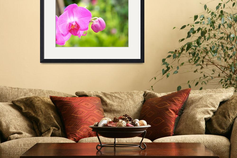 """""""Pink Orchids""""  (2008) by NjordPhotography"""