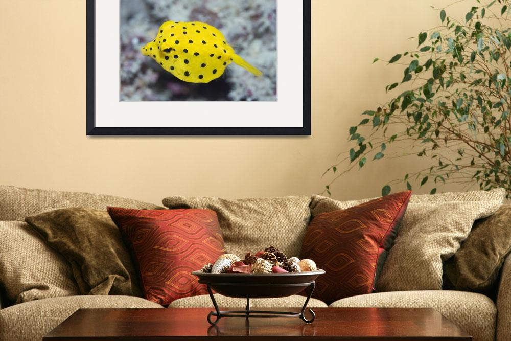 """Black-spotted boxfish&quot  by MotHaiBaPhoto"