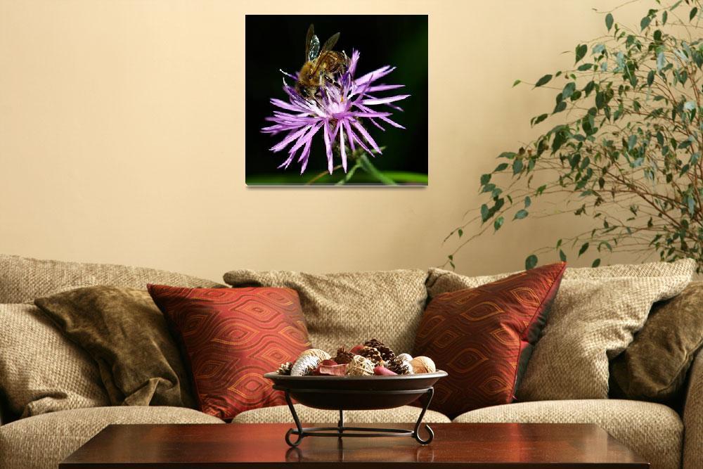 """""""Honey Bee on Wildflower""""  (2009) by bavosiphotoart"""