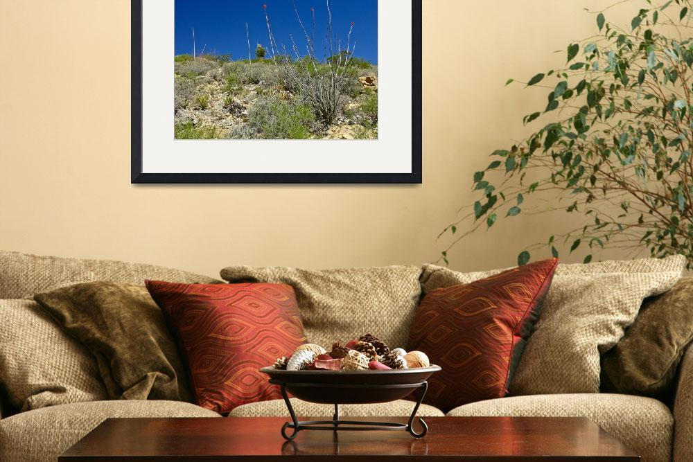 """""""Looking up to the yucca&quot  (2010) by awsheffield"""