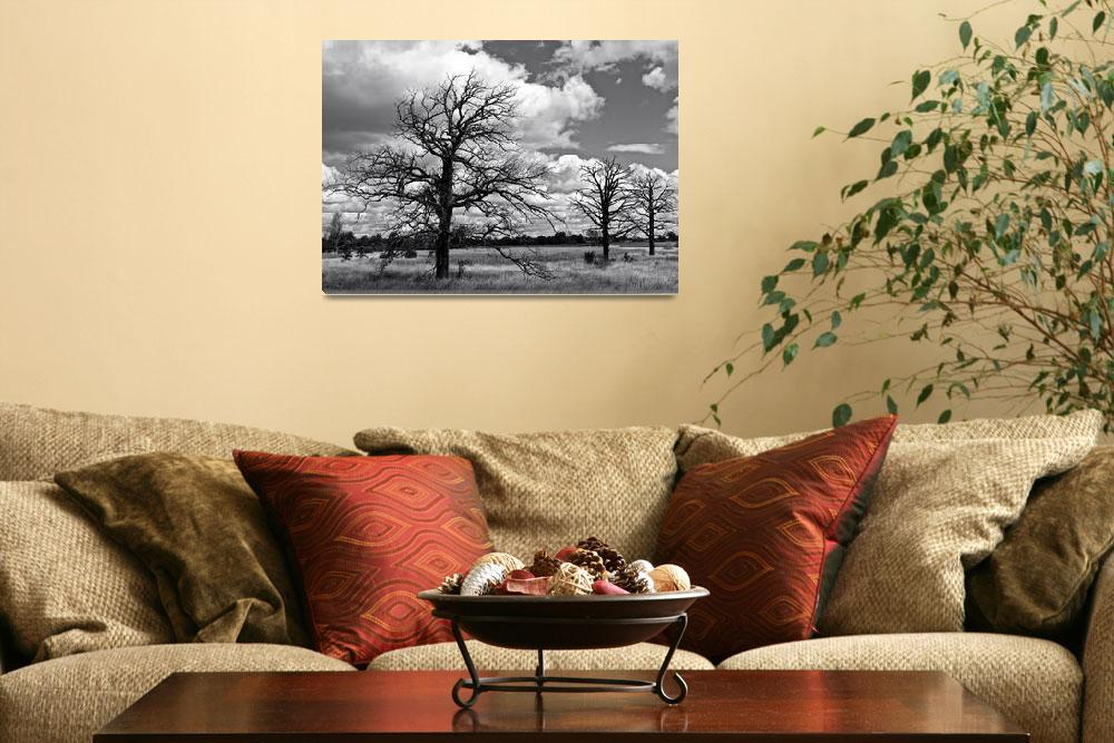 """My Three Tree - Black and White&quot  (2012) by mommysam"